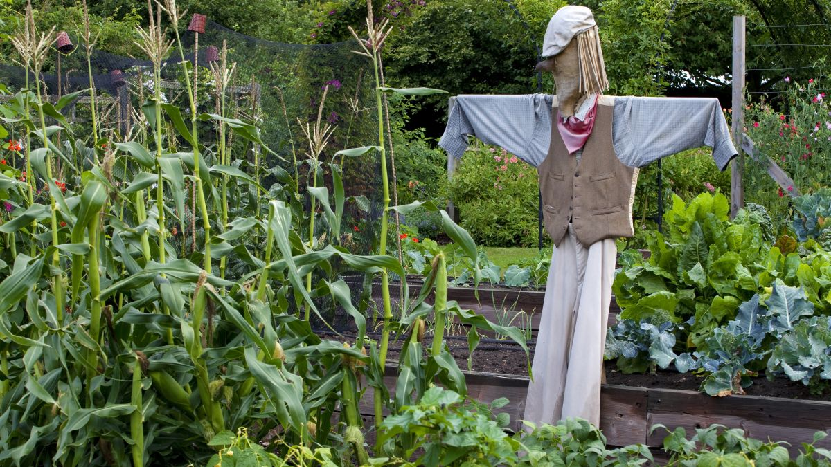 Alleviate The Beauty Of Your Garden With The Gardening Ornaments